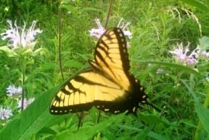 Chasing Butterflies 2