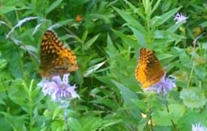 Chasing Butterflies 3