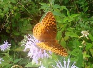Chasing Butterflies 1